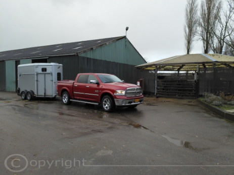 Doge Ram met Ifor Williams hb 511 XL